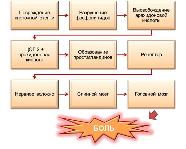 Схема возникновения боли