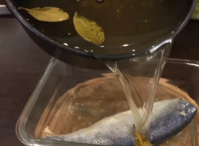 засолка селедки с горчицей