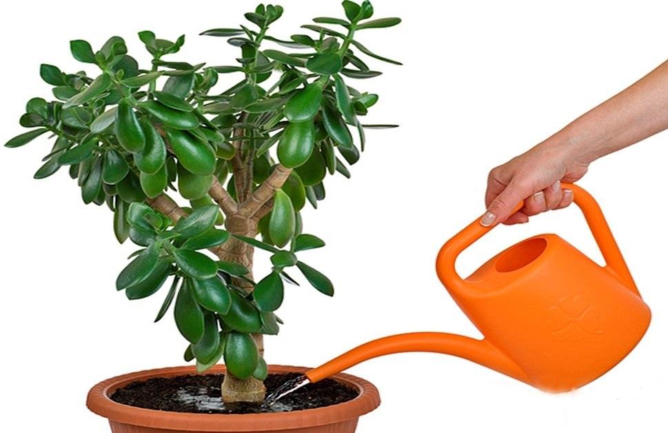 Полив из лейки растения
