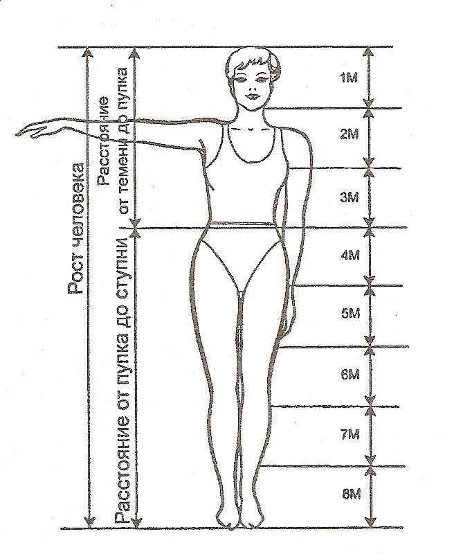 Необходимые пропорции фигуры человека
