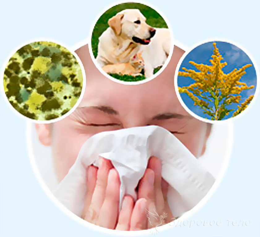 Причины аллергического насморка