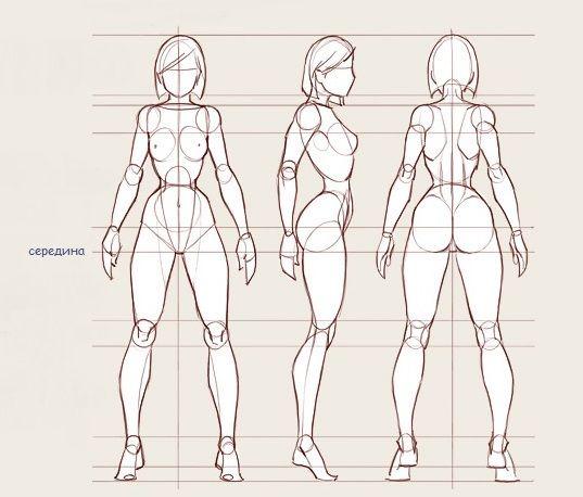 Пропорции женского тела 1 из вариантов