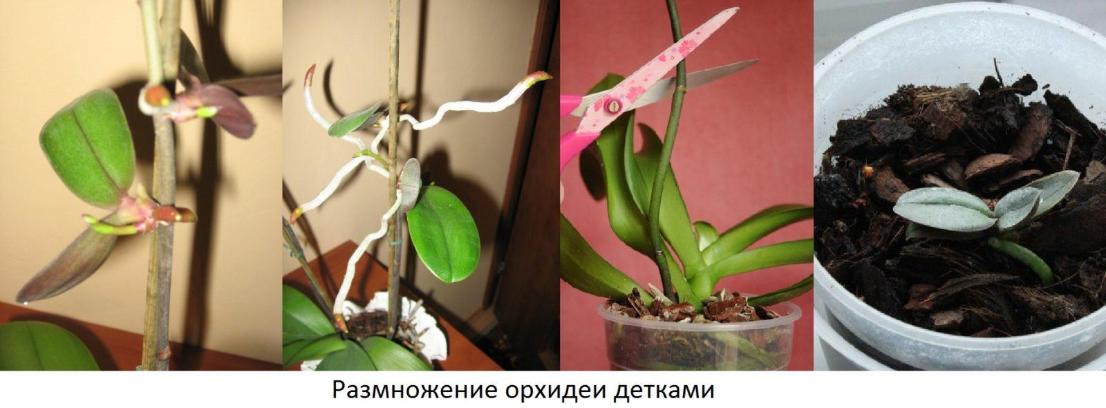 Наглядный пример размножения