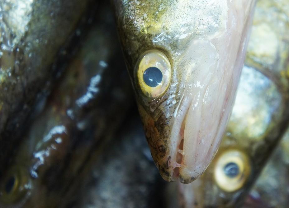 Глаза у рыбы в магазине