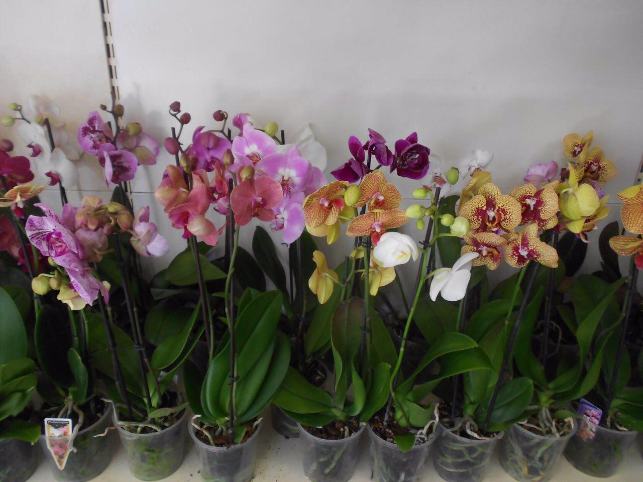 Несколько разных цветков