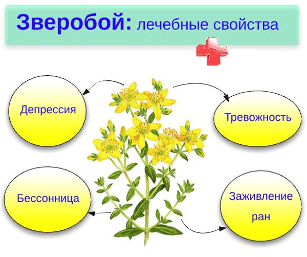 4 основных лечебных свойства