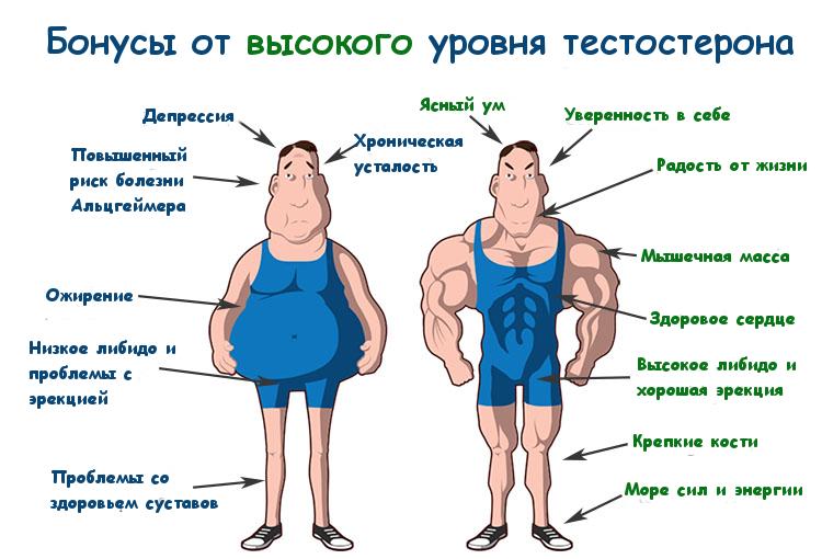 Стимуляция выработки тестостерона