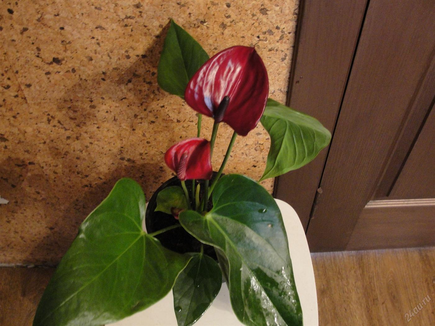 Здоровый цветок на полу