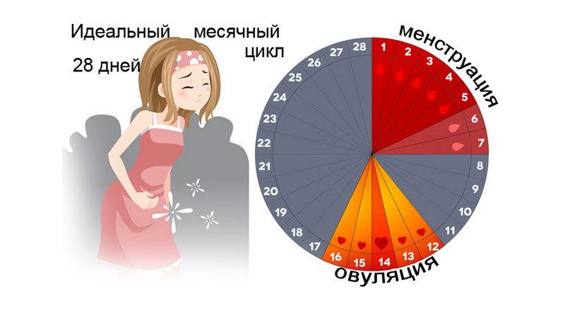 месячный цикл на картинке