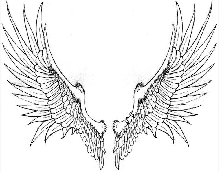 эскиз - крылья