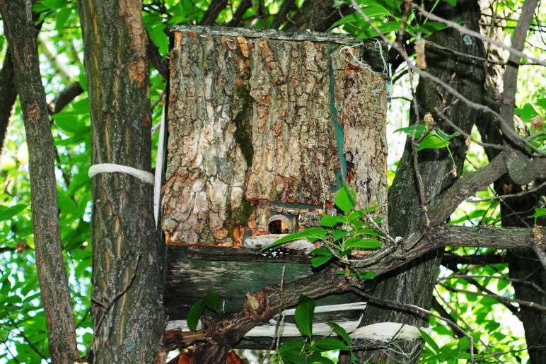 Ловля роев ловушками, как поймать диких пчел в лесу, как поймать свой рой: видео инструкции