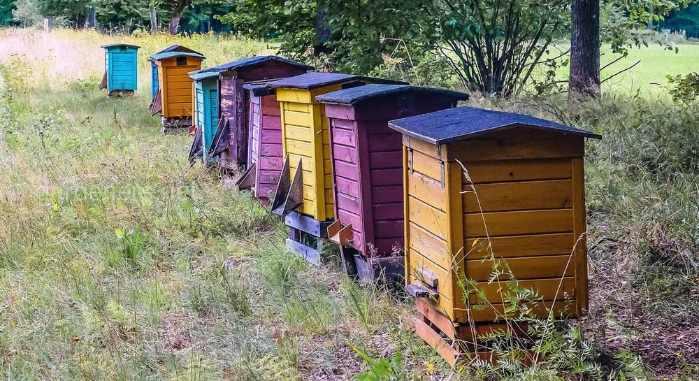 Пчеловодство для начинающих: с чего начать и как стать опытным пчеловодом